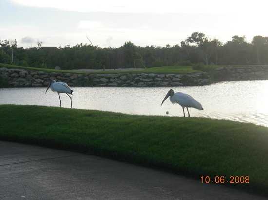 Fairmont Mayakoba:                   many forms of wildlife