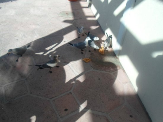 Paradise Island Harbour Resort All Inclusive:                   Beware of the birds if you eat outside.