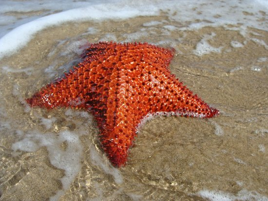 Nelson Spring Beach Resort:                   finding Starfish