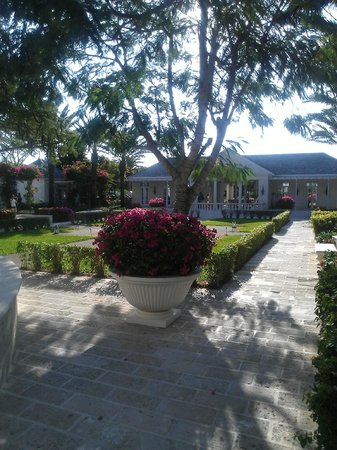 The Regent Palms:                   Courtyard