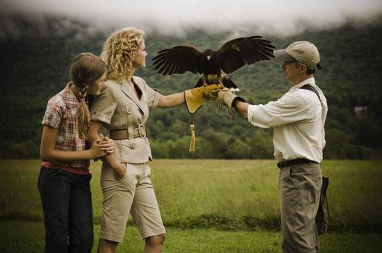 The Equinox Golf Resort & Spa: British School Of Falconry