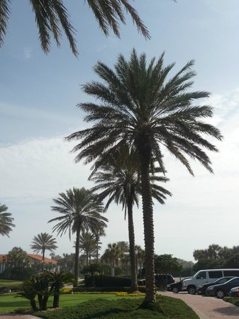 Hampton Inn Jacksonville/Ponte Vedra Beach-Mayo Clinic Area: Views around the resort