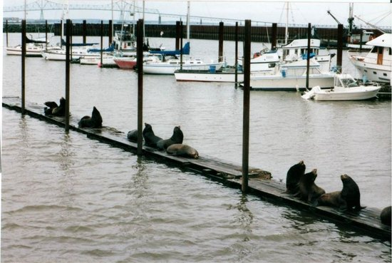 Astoria Inn:                   Seals!