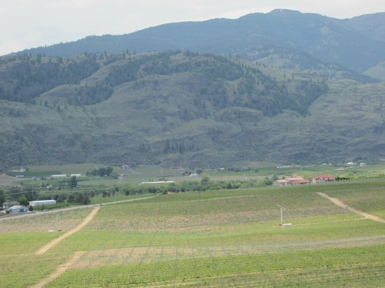Burrowing Owl Estate Winery:                   View from the top