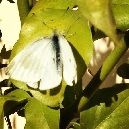 Riad Aguerzame: butterfly on the roof terrace: didn't think I would see any of those this early in the year!
