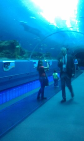 Omni Hotel at CNN Center:                   aquarium 2