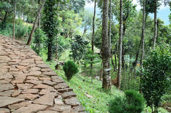 Kaivalyam Retreat:                   pathway