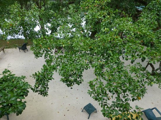 Black Orchid Resort: Tree canopy view from balcony of A4