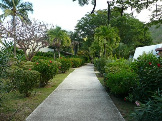 Mango Bay Resort:                   pathway to our cottage