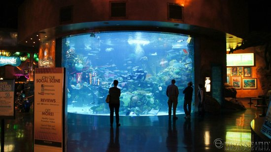 Lobby fish tank picture of silverton hotel and casino for Fish hotel tank