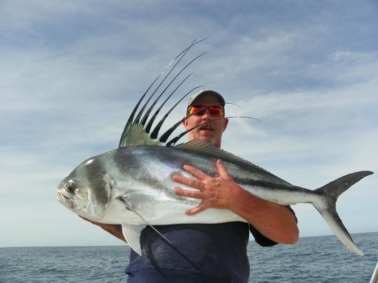 Beautifull girl picture of cabo san lucas los cabos for Rooster fish cabo