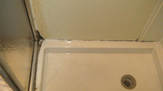 St. George Inn:                   Tiny shower stall full of mold in the Total Escape