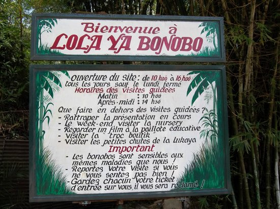 http://media-cdn.tripadvisor.com/media/photo-s/03/69/b6/a9/lola-ya-bonobo.jpg