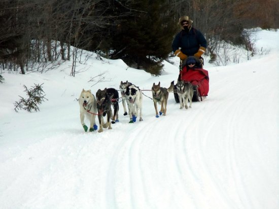 Lodge at Moosehead Lake: having a great time dog sledding as arranged by Linda