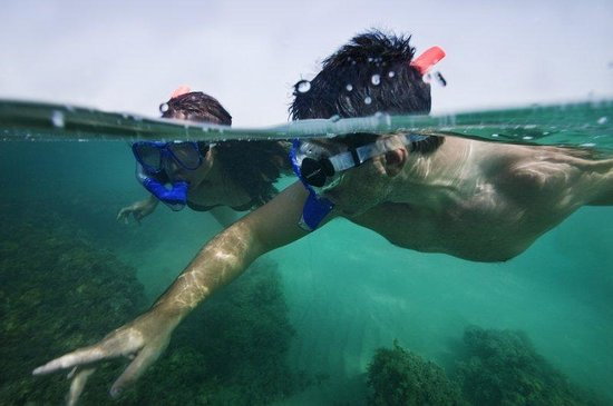 Sir Bani Yas Island, Zjednoczone Emiraty Arabskie: Snorkelling