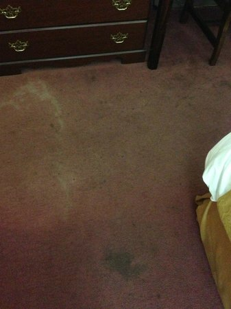 Quality Inn Schenectady: Dirty and Stained Carpet
