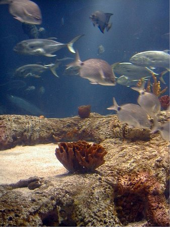 Holiday Inn Express Hotel & Suites Mt Pleasant-Charleston: South Carolina Aquarium