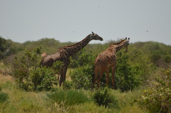 Safari Kenya Watamu - Private Day Tours:                                     elegantissime