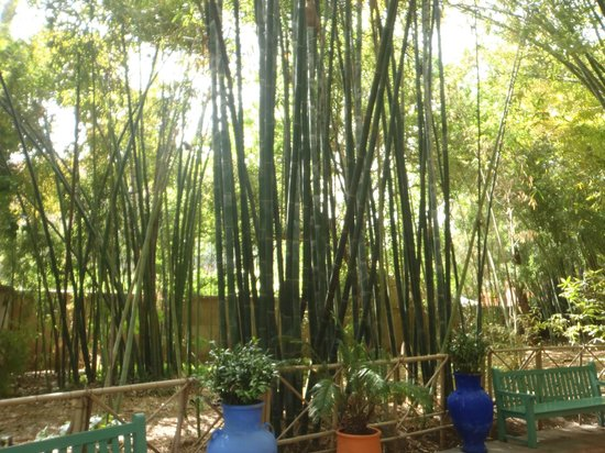 jardin de majorelle bambou picture of jardin majorelle marrakech tripadvisor. Black Bedroom Furniture Sets. Home Design Ideas