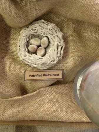 Noel, MO:                                                       Browning Museum - petrified birds nest = V