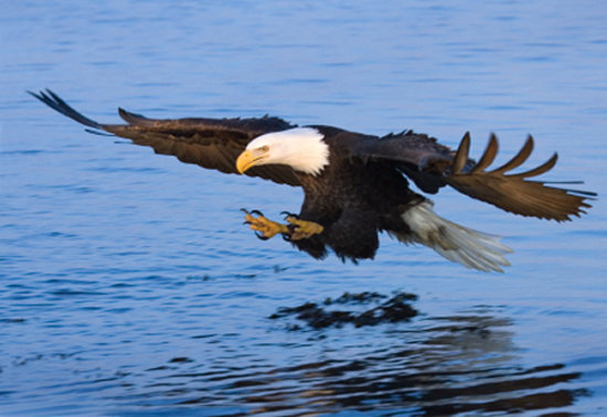 Arrow Point Condo: Eagle watching (December and January)