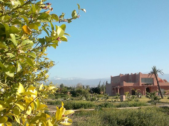 Les Riads de Jouvence:                                     Lemon trees and snowy Atlas mountains