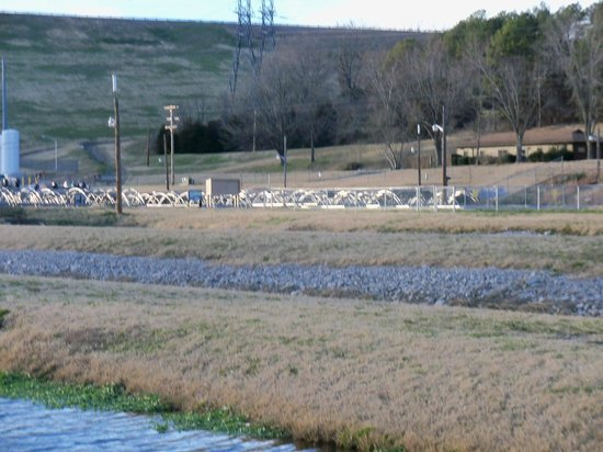 Some of the bigger fish picture of shepherd of the hills for Fish hatchery missouri
