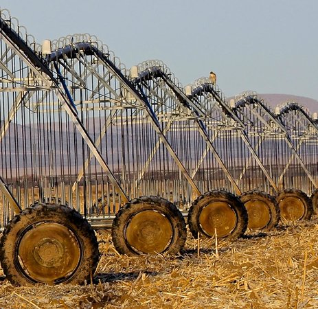 Willcox, AZ:                   Bird on the Irrigation Equipment