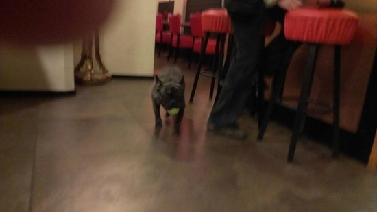Anco Hotel: Cute dog that works there!