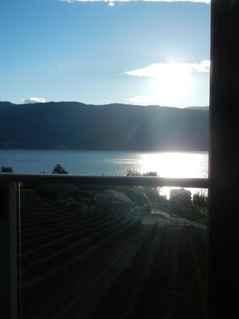 Okanagan Valley, Canada:                   the late afternoon sun