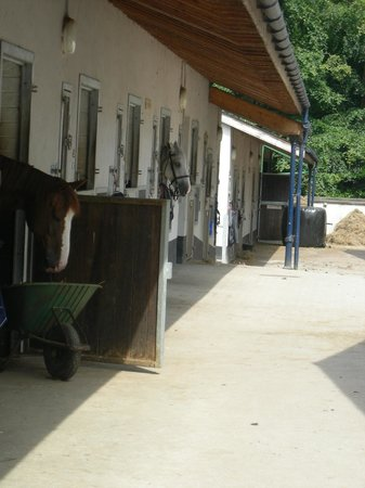 Glaslough, Irland:                   Equestrian centre
