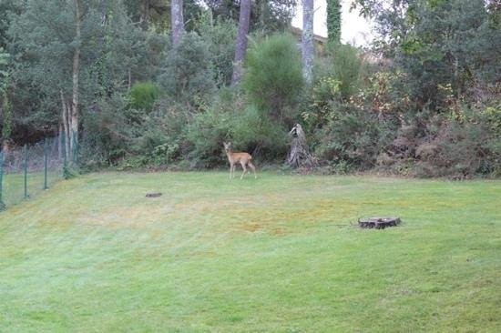 Madame Vacances Villas Club Royal Aquitaine:                   local wildlife