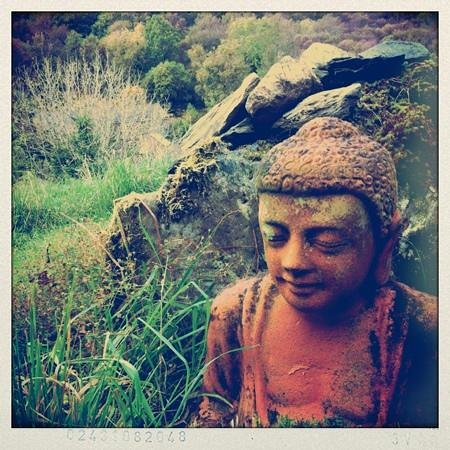 Cloona Health Retreat:                                     Buddha on the hill
