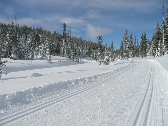Mount Washington, Canada:                   Mt Washington nordic trails