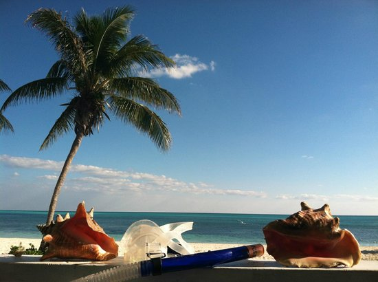 Viva Wyndham Fortuna Beach: Conch found snorkling at resort