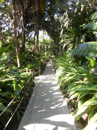 Ylang Ylang Beach Resort:                   Pathway thru the jungle to the guest rooms