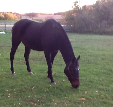 Trumansburg, NY: Otie grazing in the late afternoon.