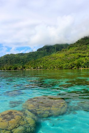 Sofitel Moorea Ia Ora Beach Resort:                   View from our OWB