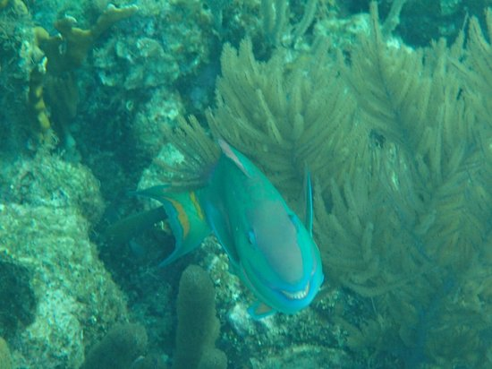 Infinity Bay Spa and Beach Resort:                   Smiling Parrot Fish