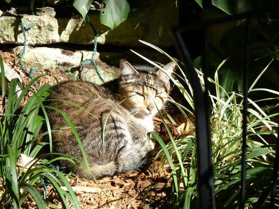 Old Town Manor:                   The resident cat