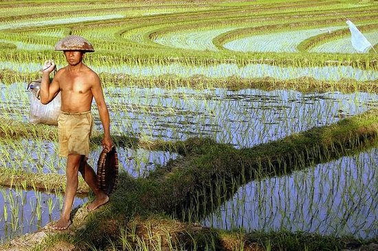 , :                   farmer activities in bali
