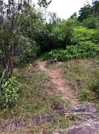Hiyare Rainforest Reservoir:                                     forest trail overgrown and poorly maintained. what are they
