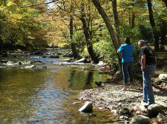 Creekside Cabins:                   Playing down by the creek