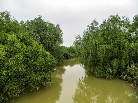 Qi'ao Island: Into the Mangroves, one of the many canals that crisscrosses the swamp and leads to the open sea