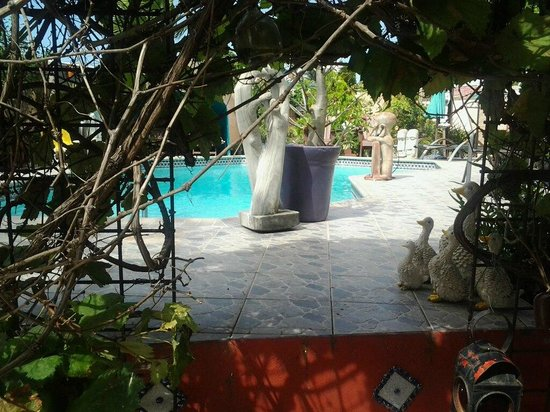 Littledavid Guesthouse:                   the garden & pool