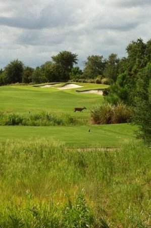 Shingle Creek Golf Club - Rates, Reviews,.
