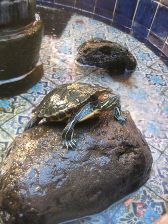 Hotel Azucenas:                   Local resident (in courtyard fountain)