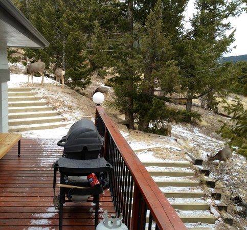 Photo of Windcliff Properties Estes Park