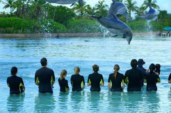 The Reef Atlantis:                                     Dolphin Interaction
