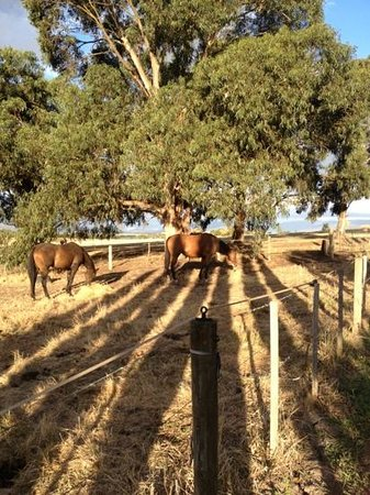 The Gatehouse at Villa Raedward: horses in the paddock next door